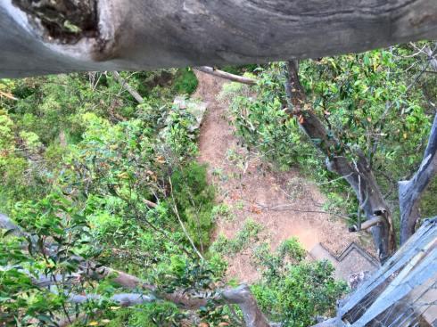 31 Gloucester tree