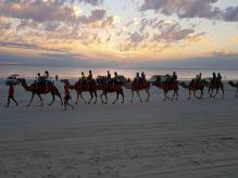 camels-on-cable-beach