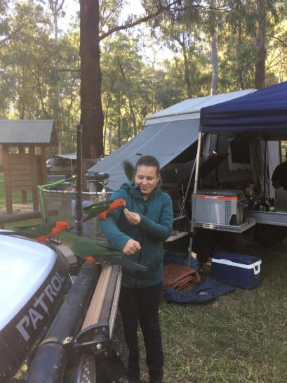 ashleigh-and-king-parrot
