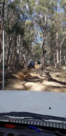 wombat 2